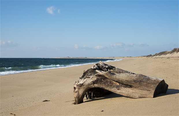 Cape Cod National Seashore