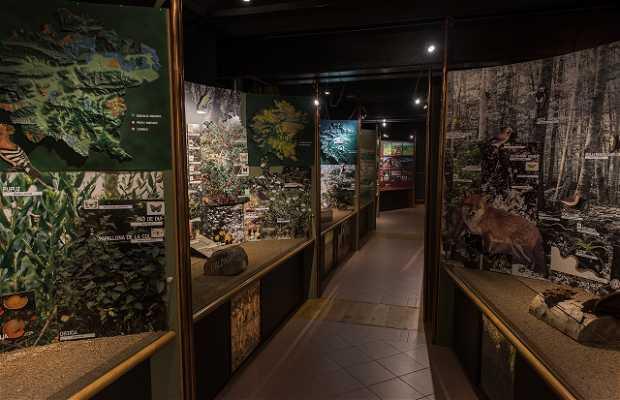 Museo de los Volcanes