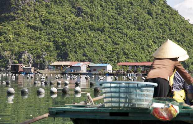 Granja de Perlas Halong Bay