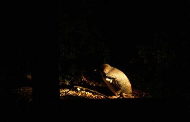 Fauna en Nueva Zelanda