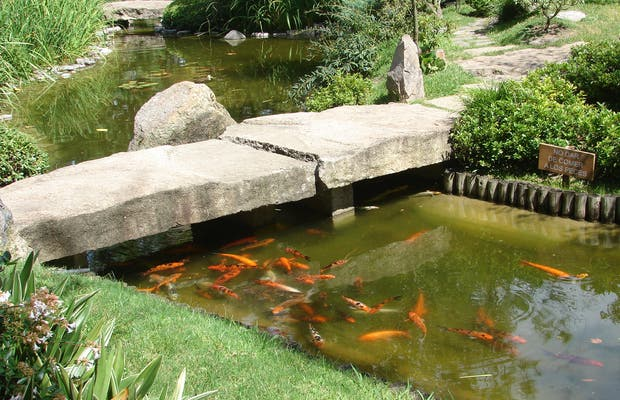 Jardín Japonés - Giardino giapponese