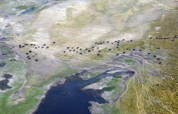 Flight to the Okavango Delta