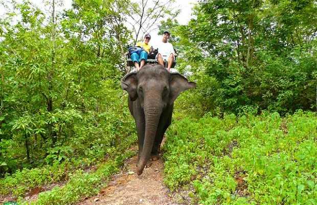 Andando de elefante en Kanchanaburi