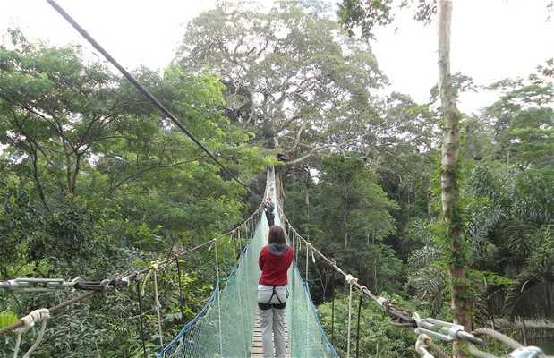 La canopée dans la salva péruvienne