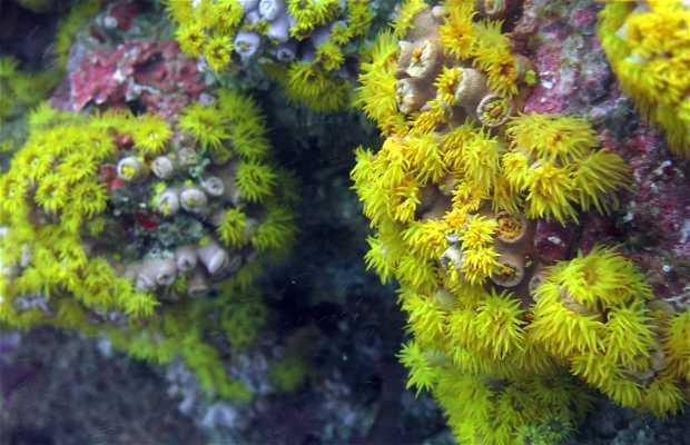 Buceo en Isla Pescador
