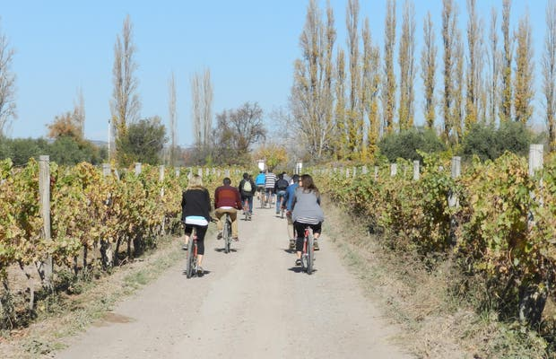 Wine Bike Tour in Mendoza