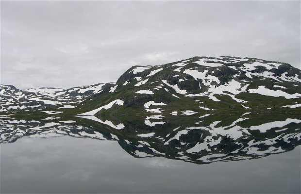 Fior noruego