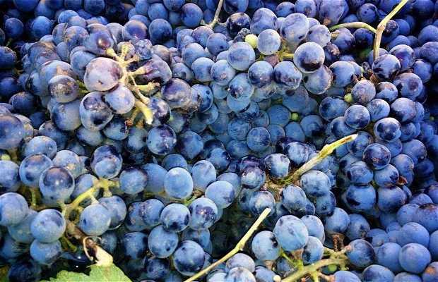 Ruta del vino del Valle de Guadalupe