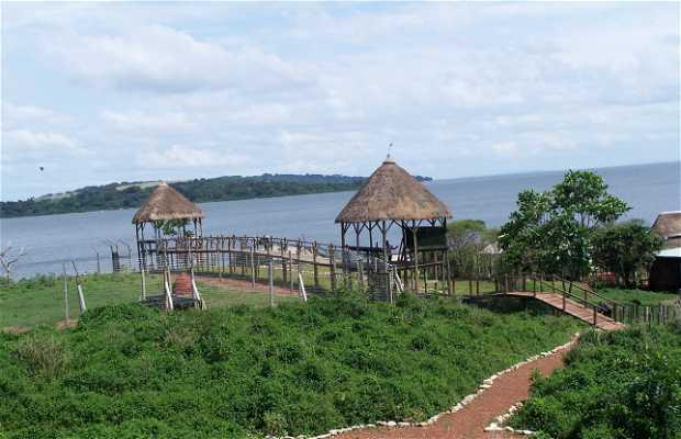 Isola Ngamba, Santuario degli Scimpanzè