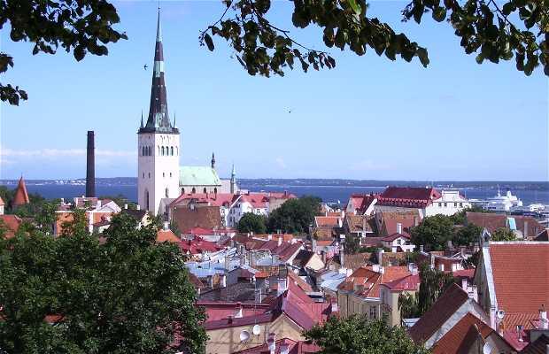 Belvedere di Tallinn - Belvedere Toompea
