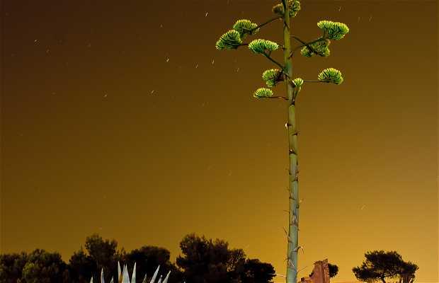 Piteras de Alicante