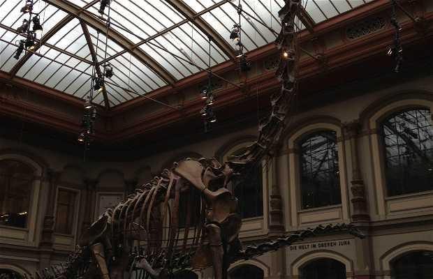 Humboldt University Natural History Museum