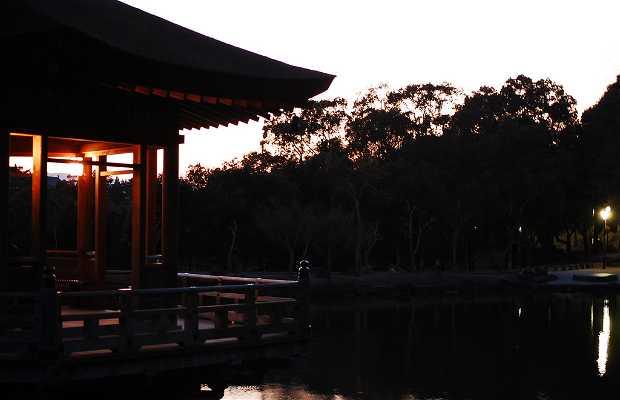 Sagi Ike a Nara