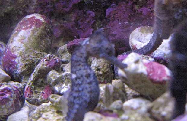 Aquarium de Xcaret
