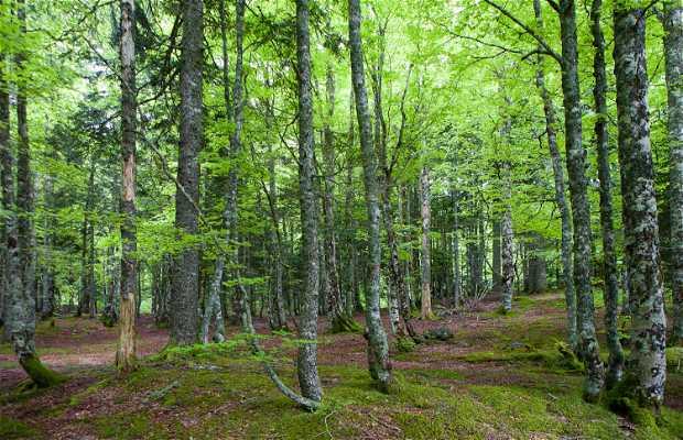 Bosque de Iraty