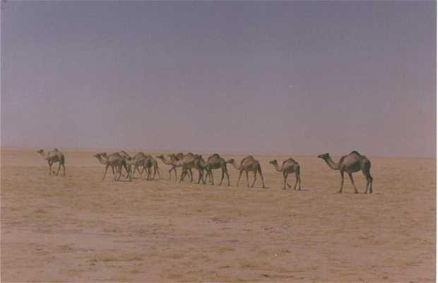 Desierto Ramlat as Sabatayn