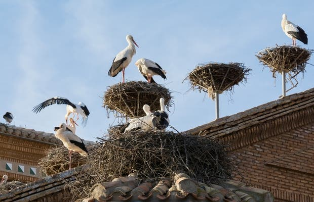 Viewpoint of storks