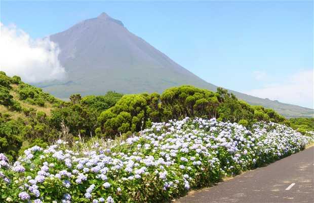 Volcán Pico