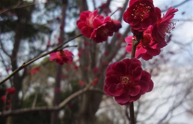 Showa Memorial Park - Showa Kinen