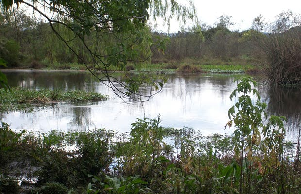 Humedal de la Conejera