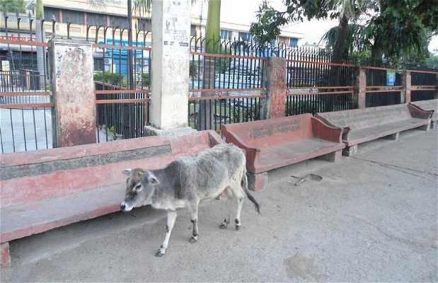 Barrio de Swarg Ashram