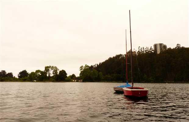 Lace - Laguna San Pedro