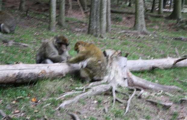 Montana de los monos