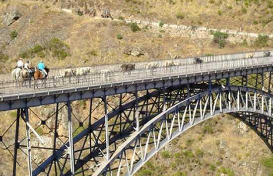 Ponte Pino
