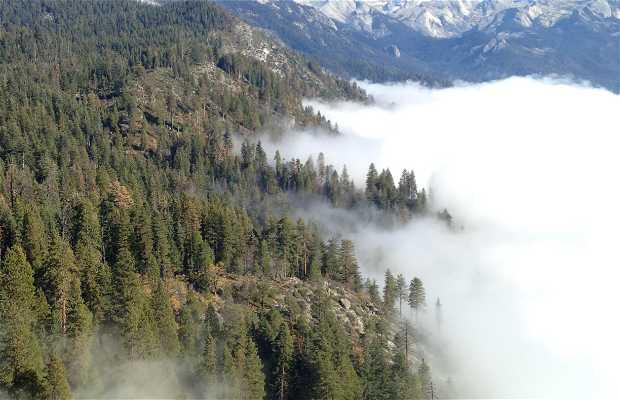 Sequoia - Parco Nazionale