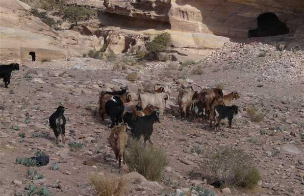 El fin del mundo en Petra