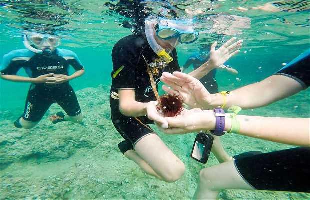Plàncton Diving