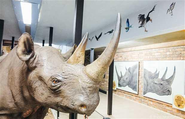 Rhino Hall
