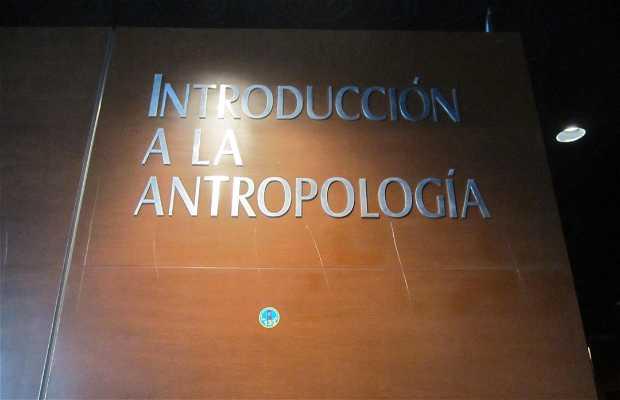 Introducción antropológica
