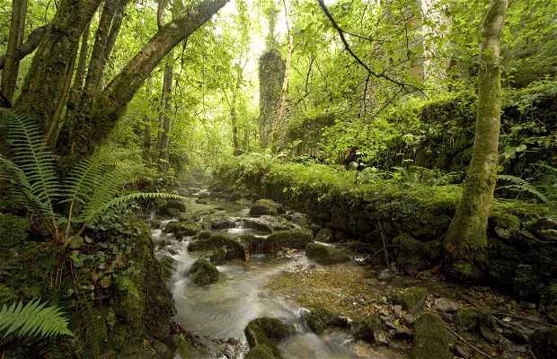 Ruta de la ribera del río de la Peña