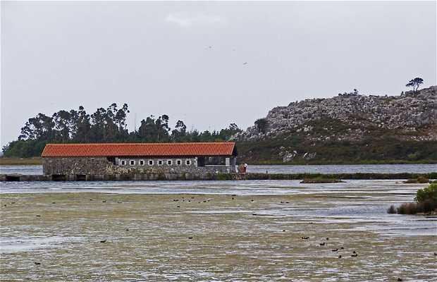 Olaja Mill