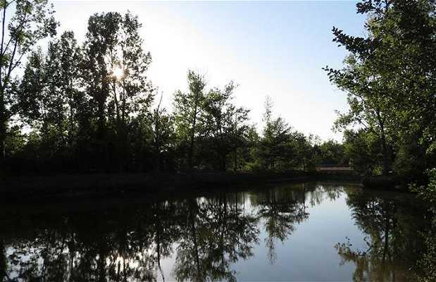 Les étangs du roseau gaillard