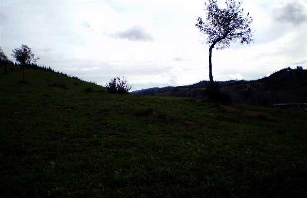 Bosques de Coelemu