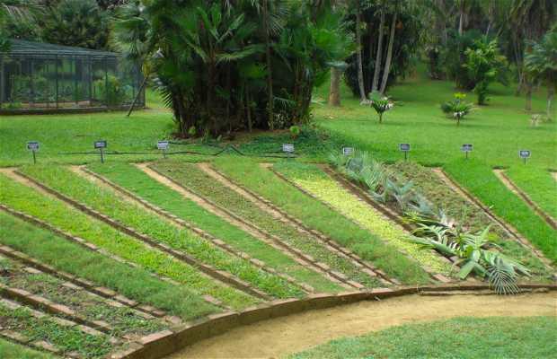 Paradeniya Gardens