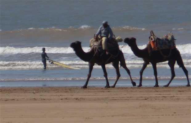Paseo en Dromedario Essaouira