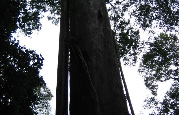 Parcs tropicaux de Queensland