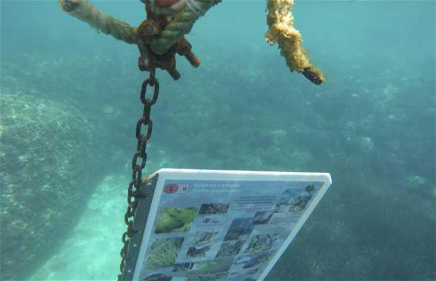 Sendero submarino de Calpe