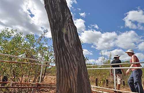 Stuart Tree