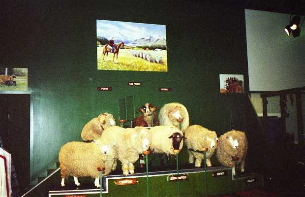 Show de Ovelhas