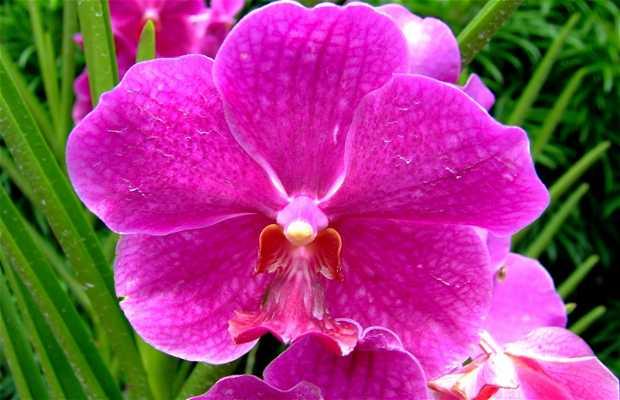 Jardin National d'Orchidées
