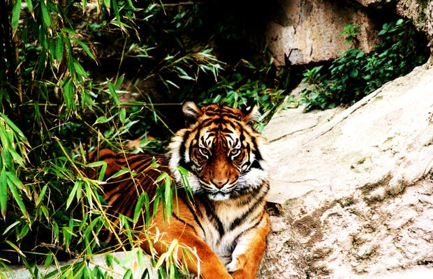 Parco Zoologico di Barcellona