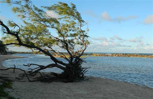 Playa de Camurupim