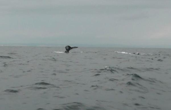 Avistamiento de ballenas en Atacames