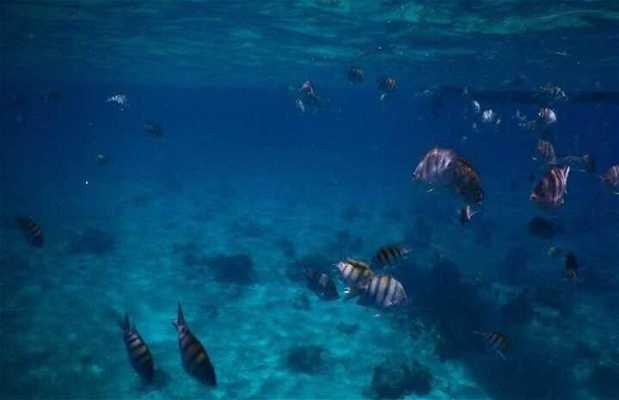 Parque nacional arrecife de cozumel