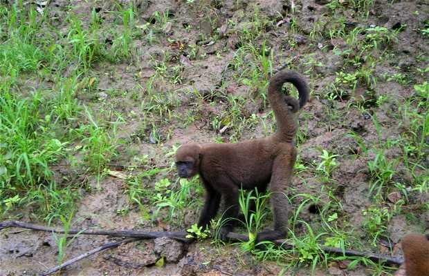 Peruvian Amazon fauna