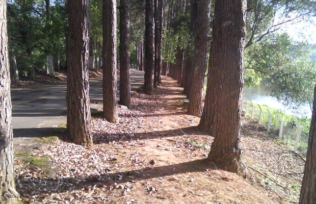 Parque Natural Municipal - Horto Florestal